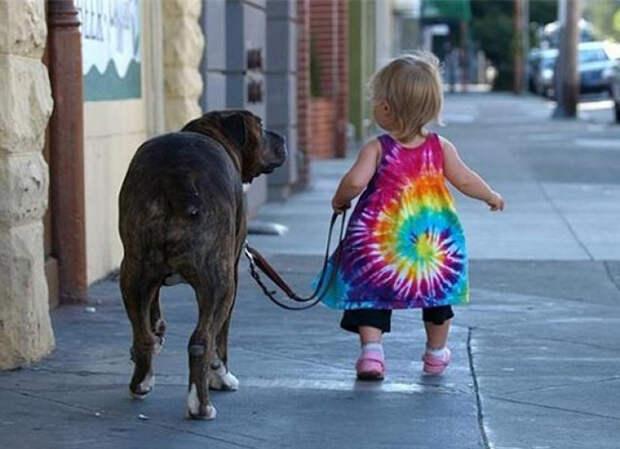 Правила жизни настоящего собакена