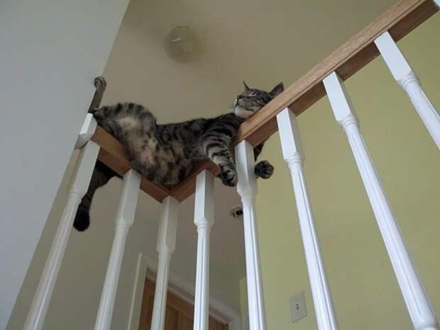 9. животные, забавно, забавные животные, кот, коты, кошки, приколы с животными, смешно