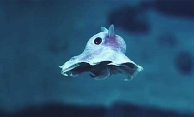 Неизвестные науке существа, которых сняла камера на дне океанского разлома в тропиках