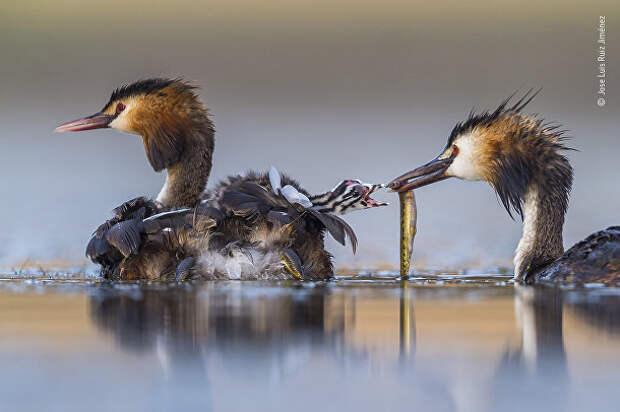Фото россиянина, получившее гран-при, идругие финалисты конкурса Wildlife Photographer ofthe Year 2020