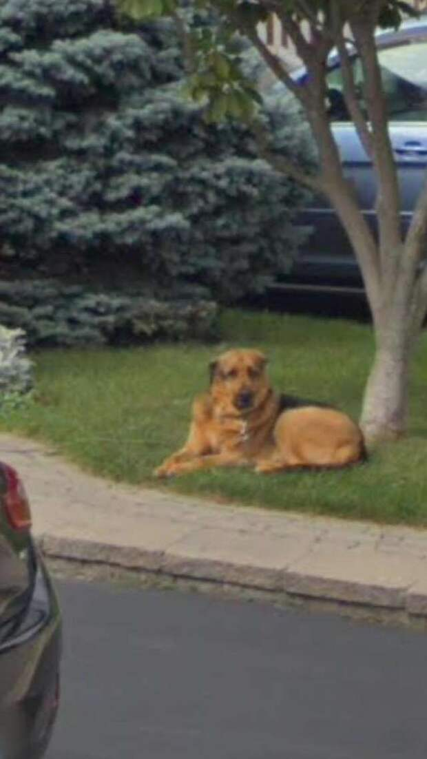 собака на лужайке