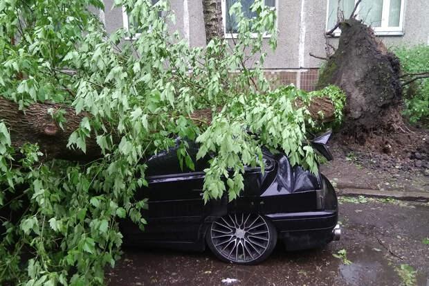 Ветер повалил в Москве десятки деревьев