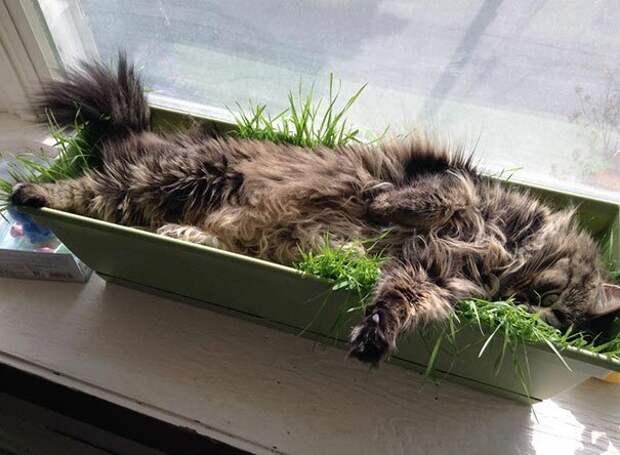 """13. """"Я посадила траву, чтобы моя кошка ее ела. Но она решила, что это новое место для сна"""" животные, забавно, забавные животные, кот, коты, кошки, приколы с животными, смешно"""