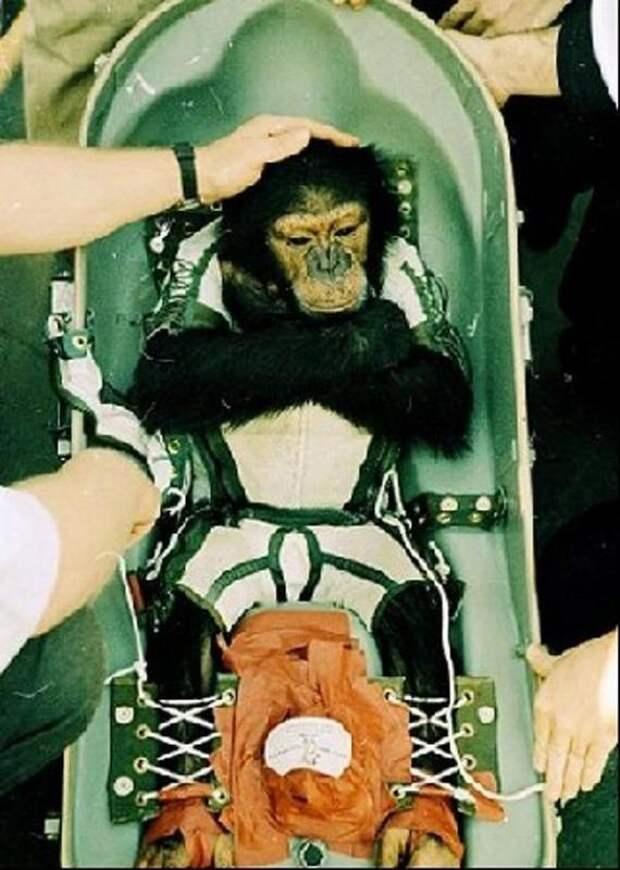 История покорения космоса животными