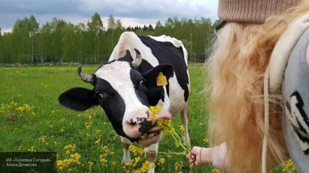 Эксперт назвал страну, которую можно считать эталоном в сфере сельского хозяйства