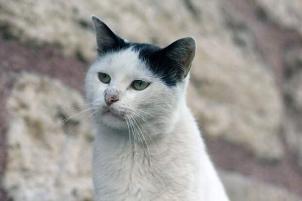 «Пошли домой?»: девушка, которую никогда не любили животные, обратилась к уличной кошке. И та покорно потопала за ней