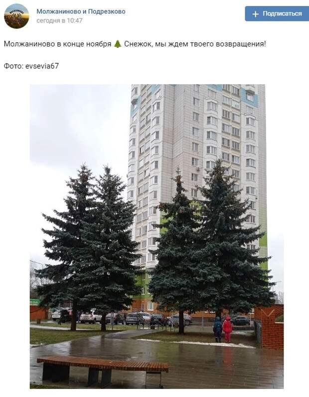 Фото дня: ёлки на Синявинской ждут снега