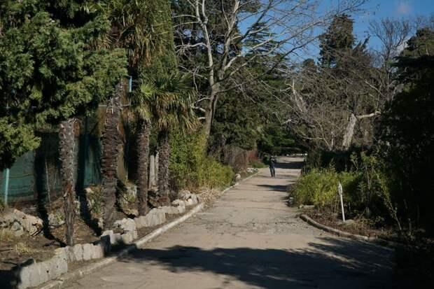 форос форосский парк пальмы природа крым