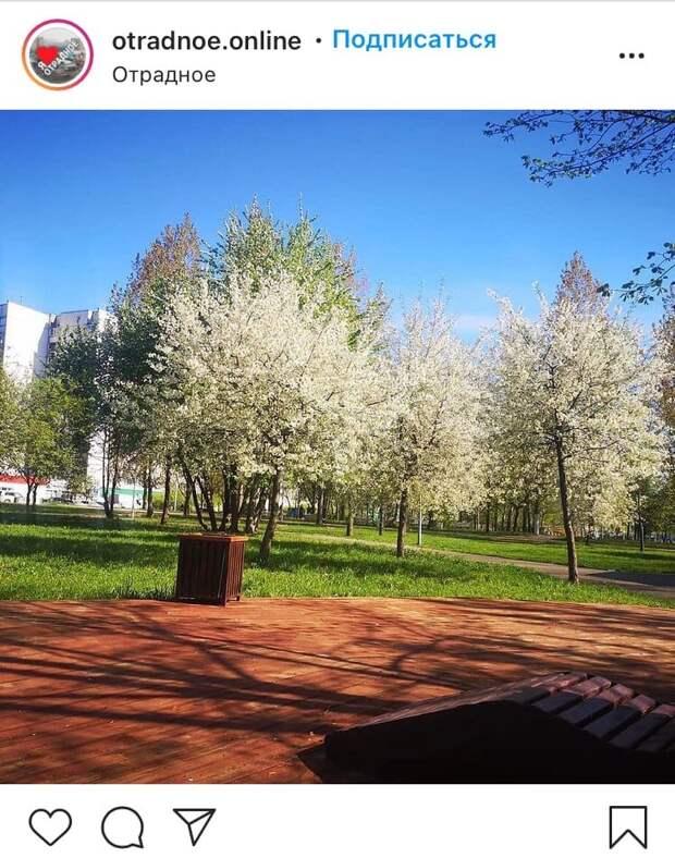Фото дня: в Отрадном появились деревья-сугробы