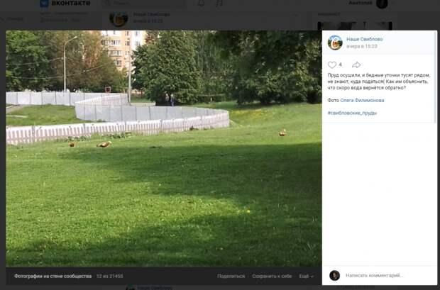 Фото дня: во время очистки прудов огари ходят без дела по Свиблову
