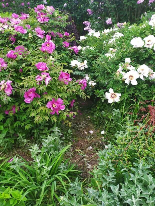В симферопольском ботаническом саду местные жители ради селфи вытоптали цветы