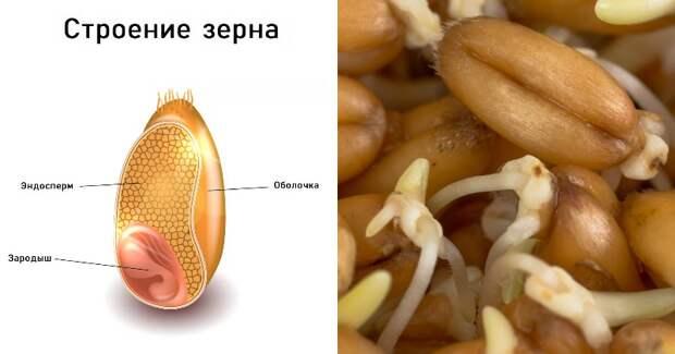 ЗДРАВОТДЕЛ. Полезные семена