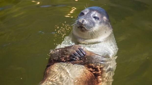 Минприроды назвало причины гибели десятков тюленей в Каспии