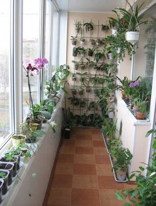 http://balkonhelp.ru/wp-content/uploads/2014/08/rasteniya-i-tsvetyi-na-balkone.jpg