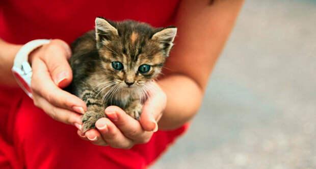 Подбросили котенка. Яжекотомать, не смогла пройти мимо. Часть 1 | Зверь Ё |  Яндекс Дзен