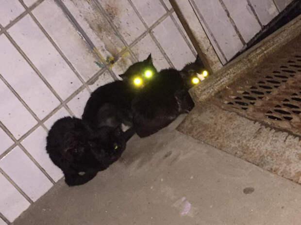 Серийную убийцу котов отправили в психлечебницу: соседи в шоке