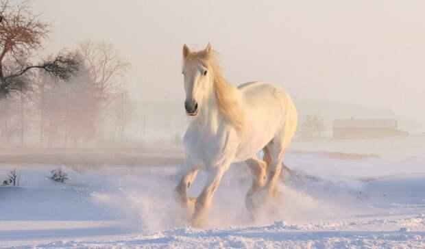Табун лошадей вмерз влед наводоеме вРостовской области