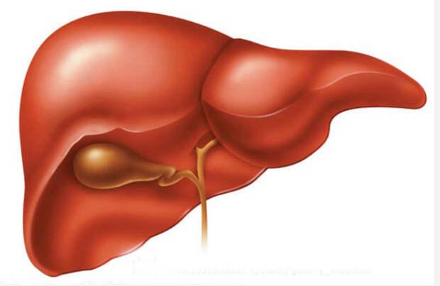 Дискинезия желчевыводящих путей и желчного пузыря лечение народными средствами.