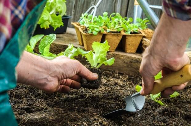 Грамотный уход за грядками – основа хорошего урожая