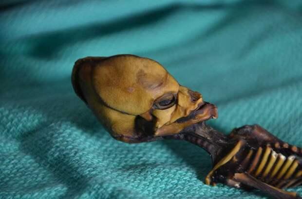 Полный геном «гуманоида» из Атакамы раскрыл редчайшие нарушения развития скелета