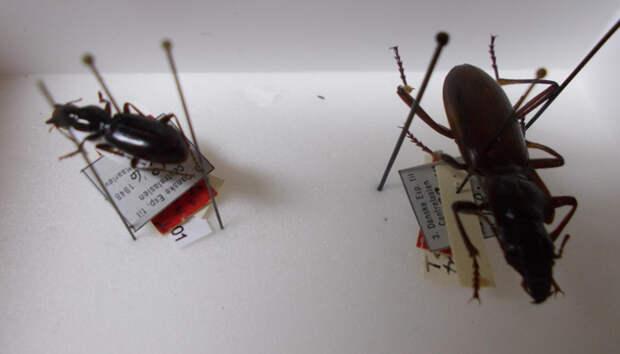 Таможня не пропустила в Финляндию 2388 насекомых