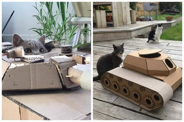25 забавных фото котов в картонных танках, которые захватили соцсети