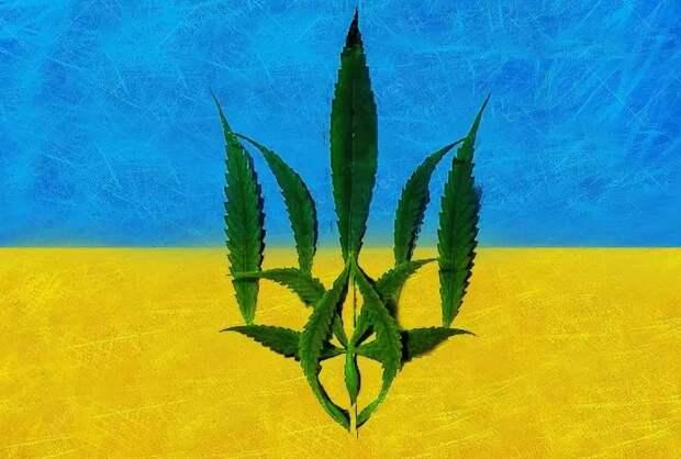 Медицинскую марихуану собираются узаконить в Украине