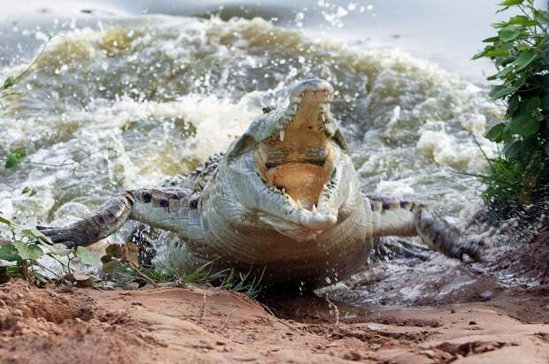 zhivotzaiyun 11 Лучшие фотографии животных со всего мира за неделю