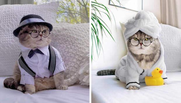 Стильный кот Бенсон: перевоплощение из бездомного оборванца в звезду соцсетей