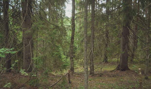 В Башкирии запретили походы в лес