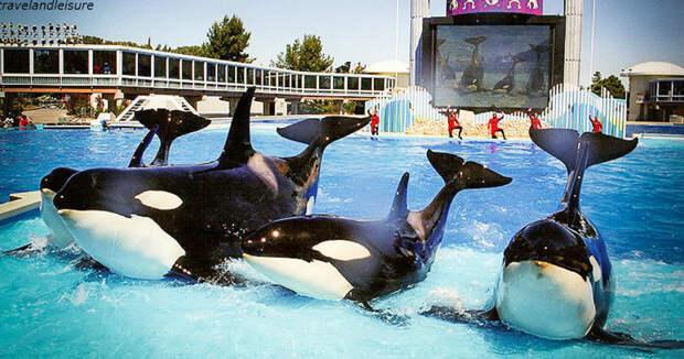 Канада запретила поимку дельфинов и китов - даже для дельфинариев