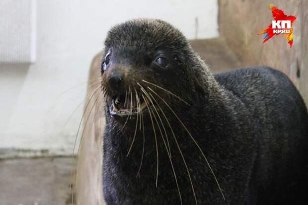 Морской котик Бари стал героем дня в дельфинарии.