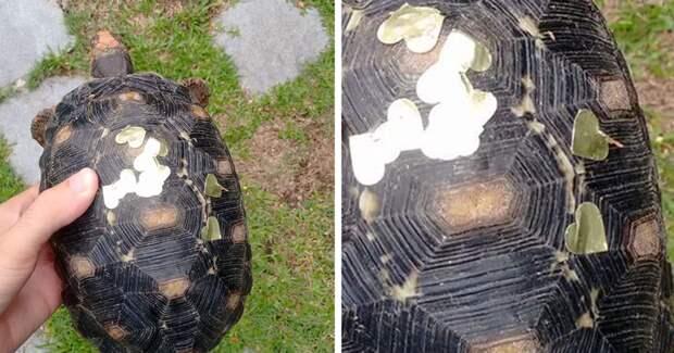 Домашняя черепашка, отсутствующая дома три недели, оказывается тусила на вечеринке