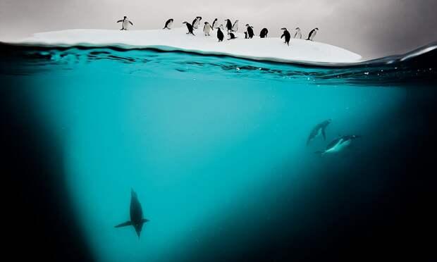 20 любопытных фактов об Антарктиде, которых вы не знали