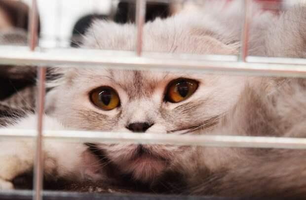 Минтранс отказался менять правила перевозки животных из-за истории с толстым котом