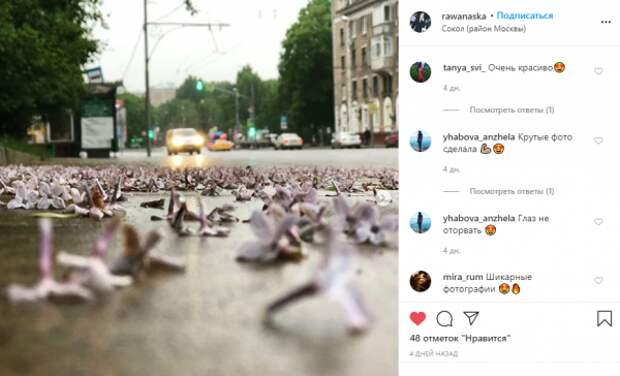 Фото дня: цветочный дождь прошел на Соколе