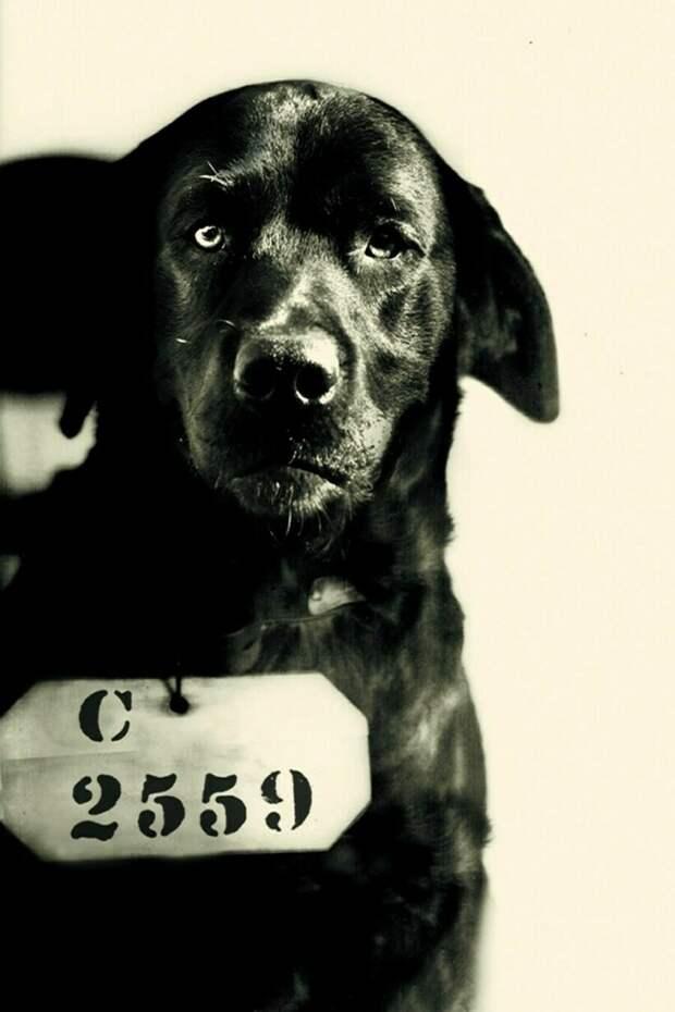 История пса, который пострадал из-за ложного обвинения