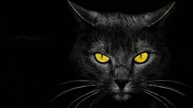 """Беременная кошка забрела в чужой двор, и ей помогли родить… Но потом котята стали исчезать – каждую ночь """"испарялся"""" еще один малыш!"""