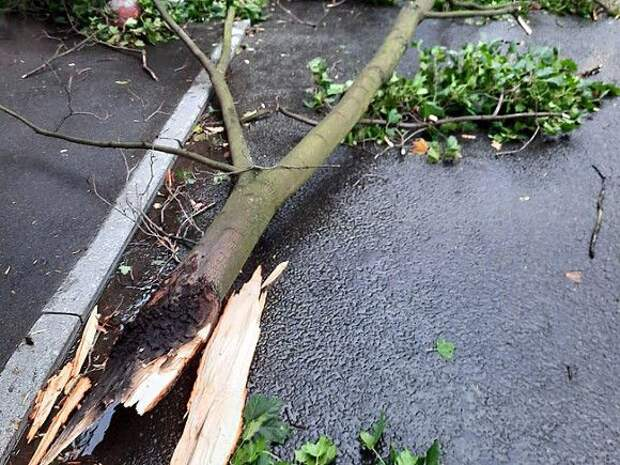 Дерево убило пенсионерку на велосипеде в Подмосковье во время непогоды