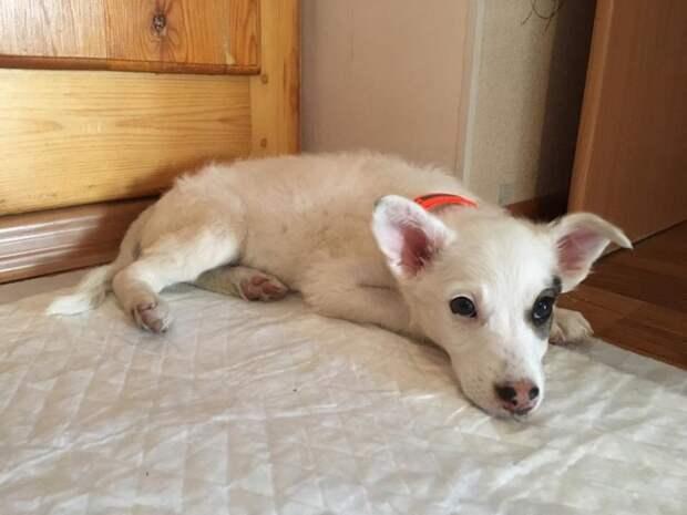 Крошка-щенок жил под плитами в яме, которую вот-вот хотели закопать  дворняга, собака, умка, щенок