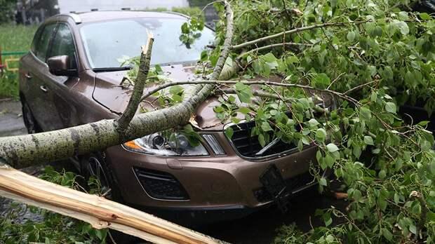 Сильный ветер повалил деревья и повредил автомобили в Санкт-Петербурге