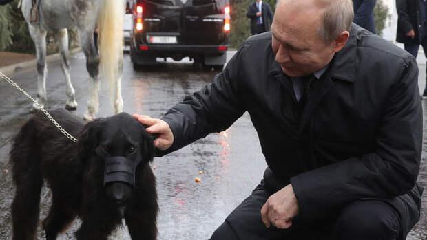 Путин поручил кабмину подготовить законопроект о ведении учета домашних животных