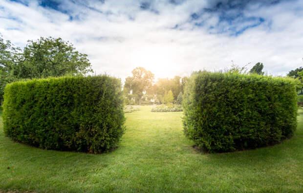 Существует множество вариантов живой изгороди