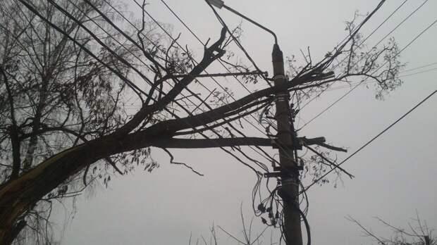В Москве ураганный ветер повалил дерево на пешехода