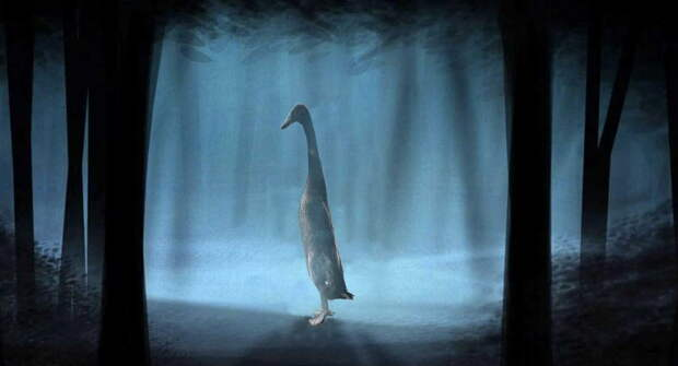 Большая утка вышла погулять у пруда и стала мемом. Что в ней такого особенного?