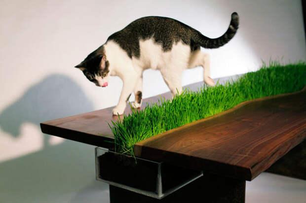 Стол с травой для кота.