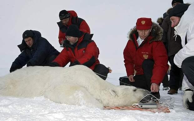 В 2010 году Владимир Путин совершил экспедицию в Арктику на Землю Франца-Иосифа. Целью экспедиции было изучить ареалы обитания белого медведя. Премьер-министр также одел на одного из них спутниковый ошейник