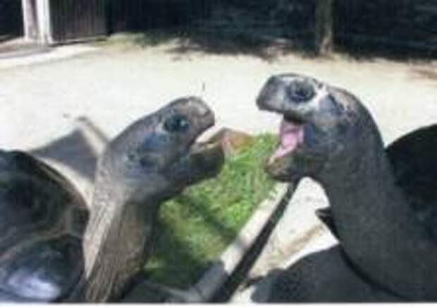 Черепахи разорвали отношения после 115 лет «брака»