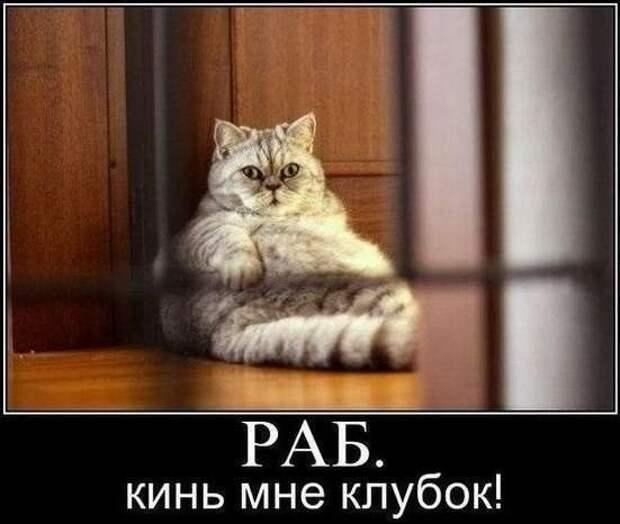 Издеваются над нами интересное, коты, смешное