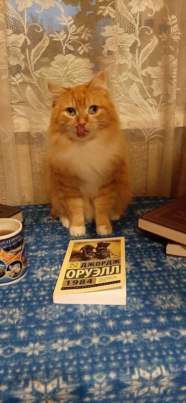 кот в доме